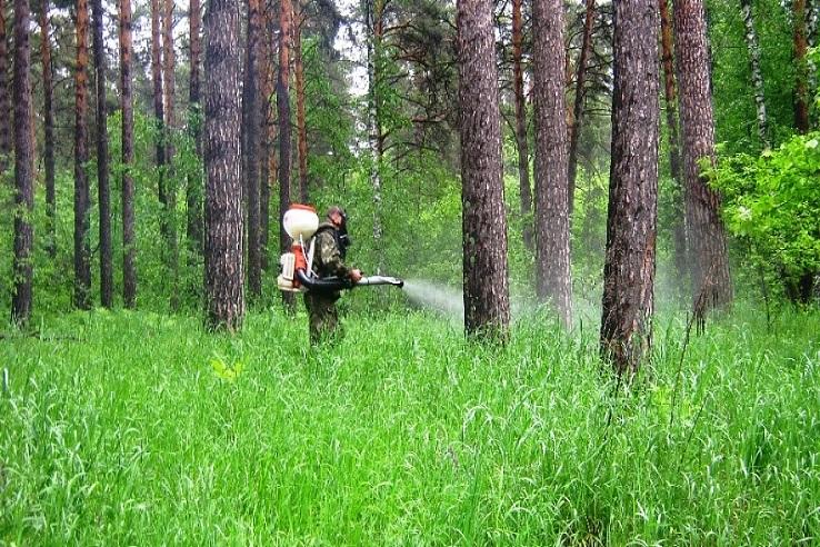 Обработка от клещей лесных массивов в Балашихе